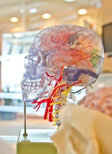 Mit Insighttech kann man das Gehirn medizinisch behandeln, ganz ohne Operation